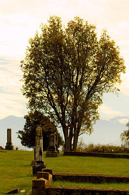 Photograph - Cemetery As Evening Approaches - Tree by Marie Jamieson