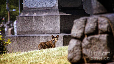 Photograph - Cemetery Cat by Mark Thomas