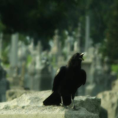 Cemetery Corvidae As It Caws Art Print by Gothicrow Images