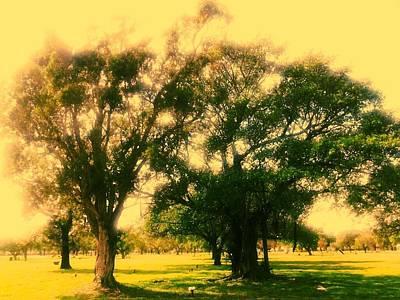Cemetery Trees Art Print