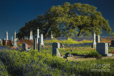 Photograph - Cemetery Wildflowers by Richard Mason