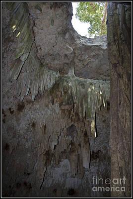 Photograph - Cenote Del Yucatan 3 by Agus Aldalur