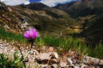 Photograph - Centaurea by Roberto Pagani