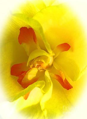 Center Daffodil Art Print by Tina M Wenger