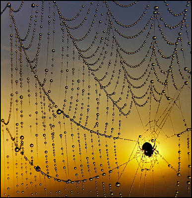 Silver Turquoise Photograph - Center Of The Spiders Universe by Adrian Campfield