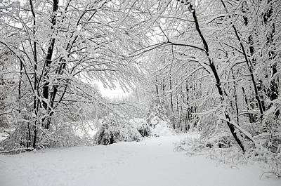 New Jersey Photograph - Central Jersey Winter 1 by Steven Richman