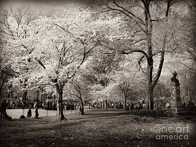 Photograph - Central Park In Bloom - Antique Appeal by Miriam Danar