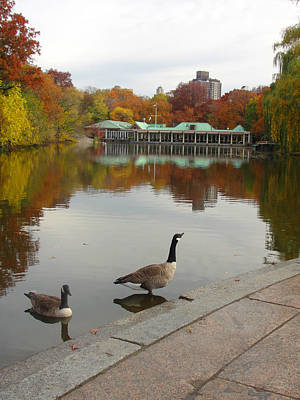 Photograph - Central Park Lake Geese by Brooke Fuller