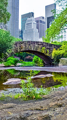 Photograph - Central Park Nature Oasis by Charlie Cliques