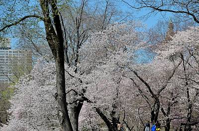 Photograph - Central Park Spring by Steven Richman