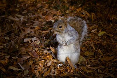 Central Park Squirrel Art Print by Marta Grabska-Press