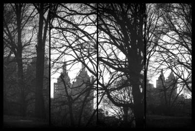 Photograph - Central Park Tetraptych I by Marianne Campolongo