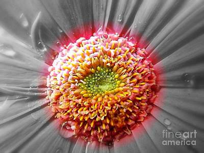 Gerbera Daisy Photograph - Centre Of Beauty by Clare Bevan