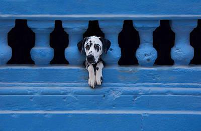 Funny Dog Wall Art - Photograph - Centro Habana by Roxana Labagnara