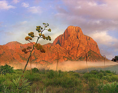 Big Bend National Park Photograph - Century Plant And Chisos Mountains, Big by Tim Fitzharris