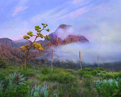 Big Bend National Park Photograph - Century Plant And Chisos Mountains by Tim Fitzharris