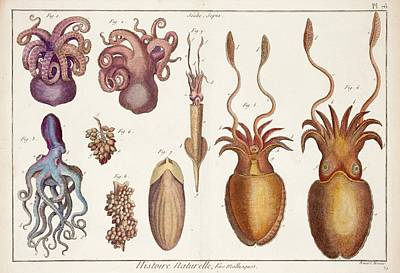 Squids Photograph - Cephalopod Molluscs by Paul D Stewart