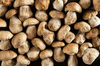 Cep Photograph - Ceps Mushrooms by Aberration Films Ltd