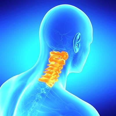 Digitally Generated Image Photograph - Cervical Spine by Sebastian Kaulitzki