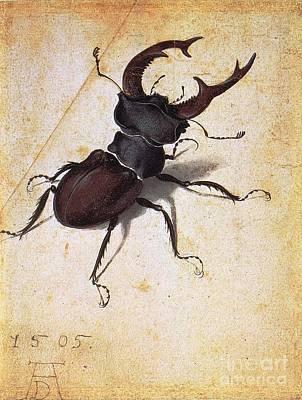 Fauna Painting - Cervus Lucanus by Pg Reproductions