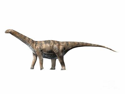 Cetiosaurus Oxoniensis, Middle Jurassic Print by Nobumichi Tamura