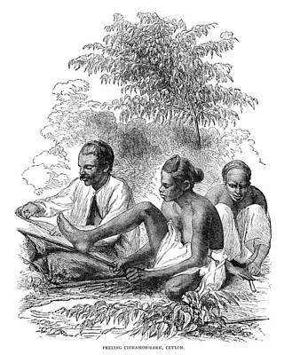 Asian Workers Painting - Ceylon Cinnamon, 1882 by Granger