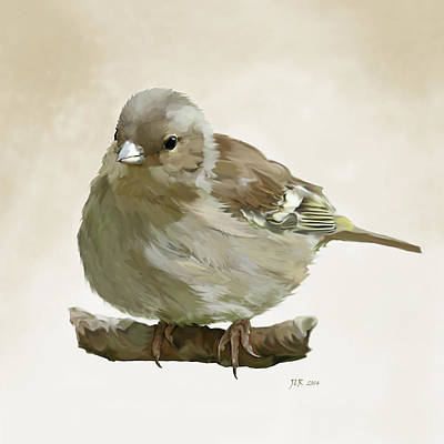 Painting - Chaffinch by Bamalam  Photography
