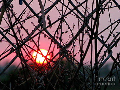 Art Print featuring the photograph Chain Link Sunset by Jennie Breeze