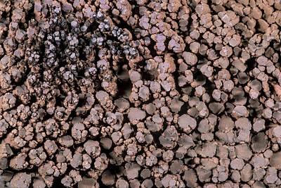 Chalcocite Crystals Art Print by Petr Jan Juracka
