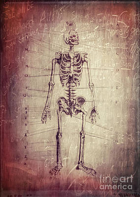 Creepy Photograph - Chalkboard Skeleton by Edward Fielding