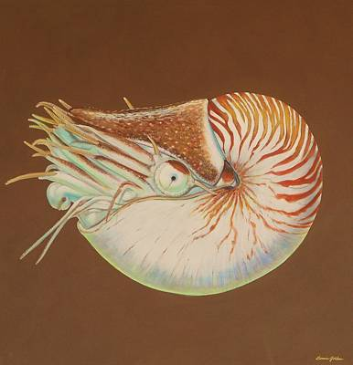 Chambered Nautilus Art Print by Bonnie Golden