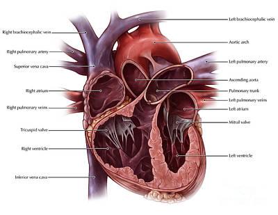 Chambers Of The Heart Art Print