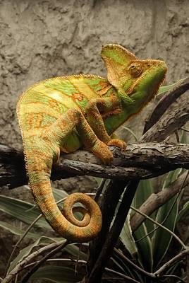 Jaguar Animal Photograph - Chameleon by Jim Hughes