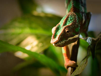 Reptile Skin Photograph - Chameleon by Marco Oliveira