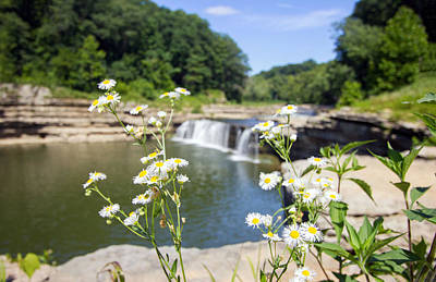 Indiana Landscapes Photograph - Chamomile At The Falls by Jackie Novak