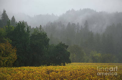 Photograph - Champagne Grapes Russian River by Craig Lovell