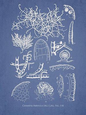 Aquarium Digital Art - Champia Parvula by Aged Pixel