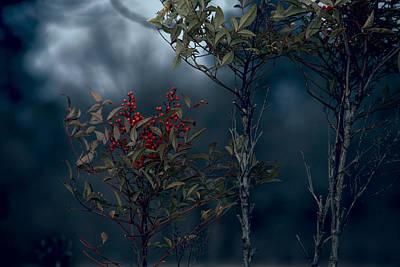 Change Of Season Art Print by Bonnie Bruno