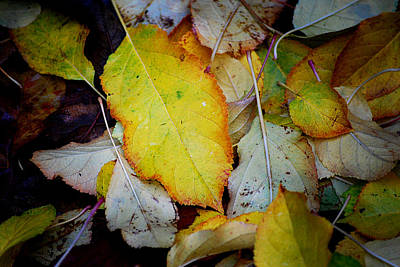 Photograph - Change Of Season by Michelle Wrighton