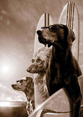 White Dogs Photograph - Changes by Garry Walton