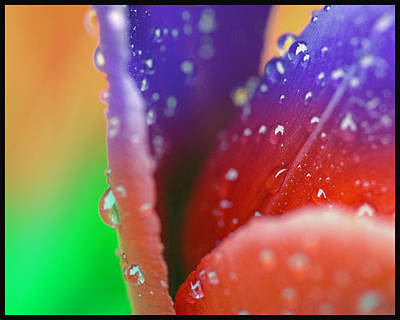 Photograph - Changing Color by Robert Culver