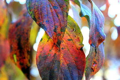 Changing Leaves Art Print by Dorothy Hall