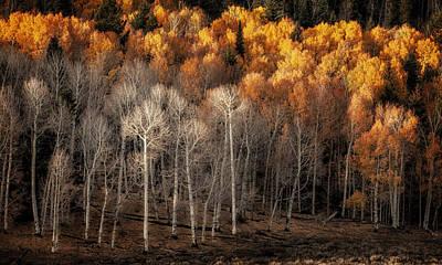 Jeff Johnson Photograph - Changing Of The Seasons by Jeff Johnson