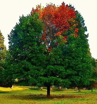 Photograph - Changing Seasons by Ed Sweeney