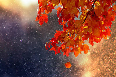 Red Leaves Snow Wall Art - Photograph - Changing Seasons by Rob Blair