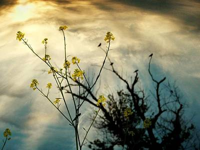Changing Sky Art Print by Gothicrow Images