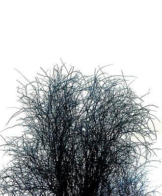 Linear Paradigm As Chaos Into Form Art Print