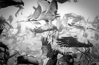 Crane Wall Art - Photograph - Chaos by Ido Meirovich