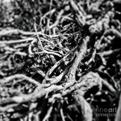 Photograph - Chaotic Veins by Fei Alexander