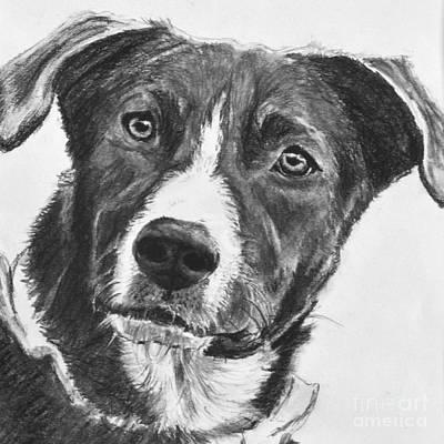 Charcoal Dog Shepherd Art Print